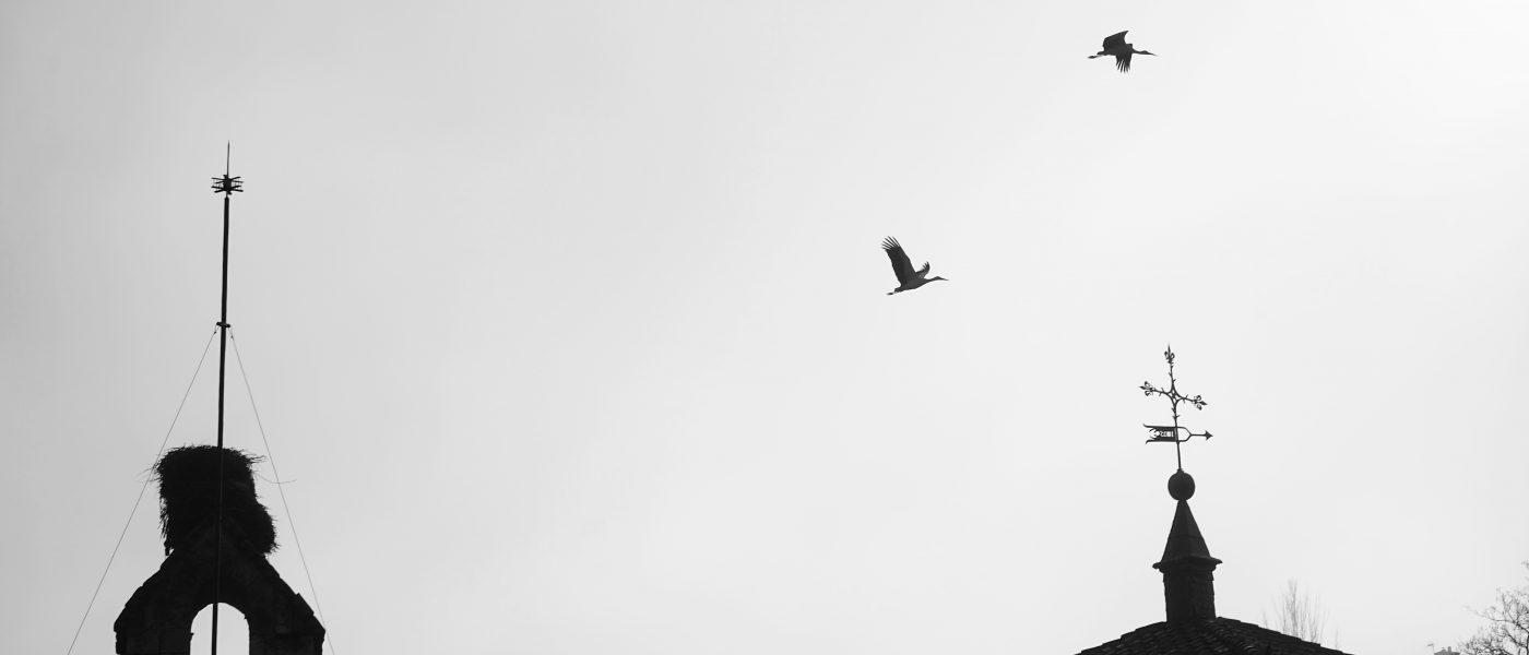 Silent storks