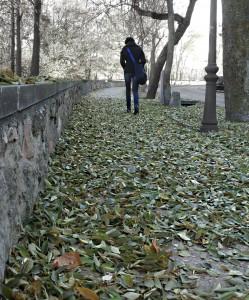 Shedding old leaves